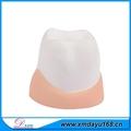 bola de la tensión en forma de diente