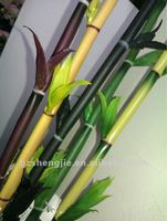 SJ Artificial lucky dracaena bamboo/dracaena sanderiana /lucky bamboo with leaf various color SJ-HCZ044-G