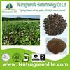 factory supply pure organic black buckwheat tea