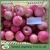 Fresh Apple of Fruit--Qinguan Apple