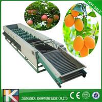 Professional orange/ lemon/ mango grading Machine / fruits sorting machine