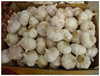 2015 crop wholesale garlic with garlic box 10kg for Brazil Market