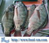 Lowest price On Sale chinese factory sea food frozen tilapia