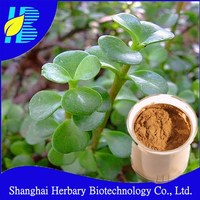 100% pure Bacopa Extract Bacopaside 20%-50% by HPLC