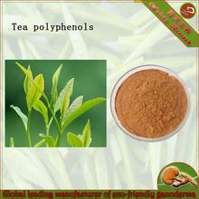 Organic Green tea extract with active ingredients Tea Polyphenol