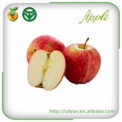 China fresh fuji apple