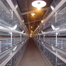 China vender boa qualidade melhor Design de bateria automático gaiola galinhas poedeiras
