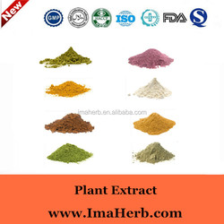 Excellent OEM Factory Supply sweet tea leaf extract