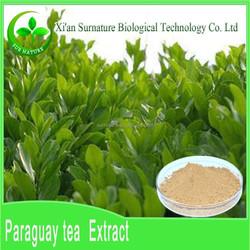 100% Natural Yerba Mate Extract/ Polyphenols 20% Yerba Mate Extract