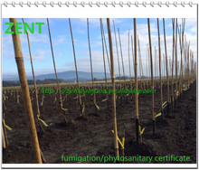 ZENT-52 PVC coated bamboo pole for agricultural