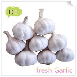New chinese fresh natural garlic price