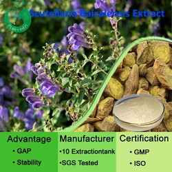 Good material Scutellaria extract /scutellaria extract for health