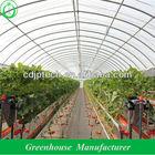 agrícola túnel para estufas de tomate