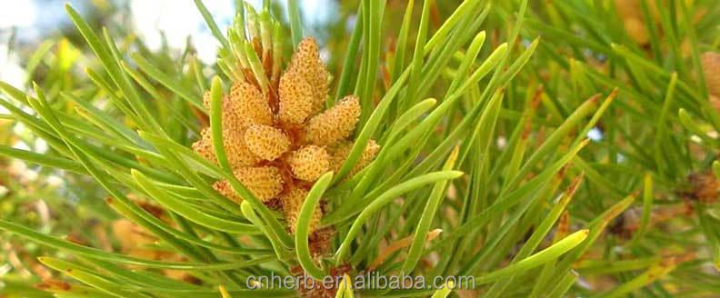 Pinus Massoniana Pollen Pini,pinus Massoniana