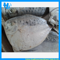 TOP quality frozen moonfish on sale