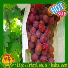 Sweet grape, purple in good condition