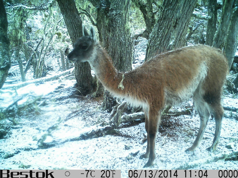 newest!12mp infrared hunting camera trail camera hunting trail camera