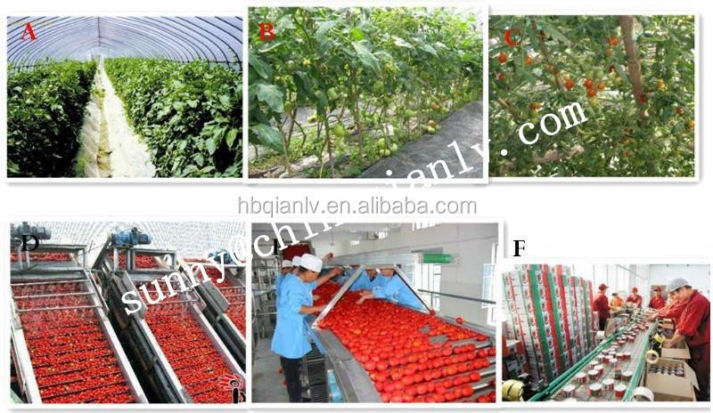 Tinned Tomato sauce 28-30% hot sale
