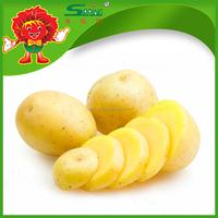 Starch Potato Seeds Round shape potatoes