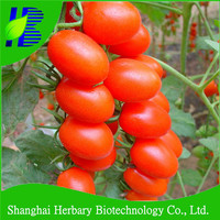 F1 Hybrid red cherry tomato seeds for sale