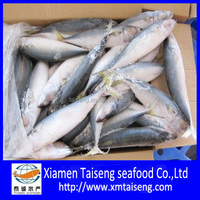 Frozen fresh ocean seafoods pacific Mackerel fish