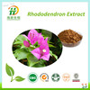 Dahurian Rhododendron Extract With Best Price
