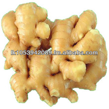 High Quality Organic FRESH or DRIED GINGER Cheap Price