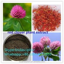 sciphar GMP Manufacturer Red Clover Plant Extract Powder
