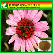 Pure Uv Polyphenols 4% Echinacea Purpurea Extract/ High Quality Echinacea Purpurea,Echinacea Purpurea Extract,Pure Natural Plant