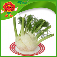 Organic Fennel for Sale, Best Fresh Fennel