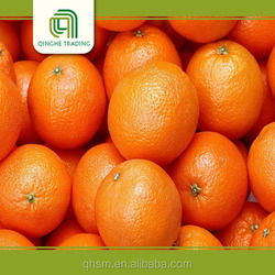 wholesale fruit and vegetable importer for wholesales