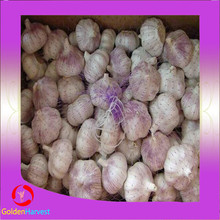 China fresh pure red garlic in different sizes