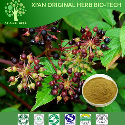 Hight quality Chinese Angelica Extrat ,Dong quai Extrat,Radix Angelica Sinensis Extract(EAS) Ligustilide 1.5%