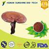 Reishi Mushroom Extract Polysaccarides 10% containing Triterpene 3%