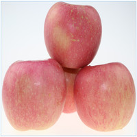 wholesale red fuji apple suppliers