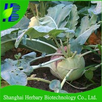 Stress resistance Turnip cabbage seeds for planting