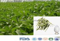 13 Years Natural Organic Bulk Pure Stevia Extract