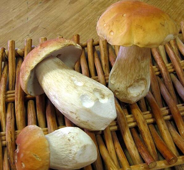 IQF белый гриб (полного/вдвое/кубов)