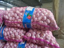 Top Fresh Garlic supplier