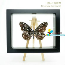 FOUSEN(039) Nature& Art double glass framed naturals accessories for home decor