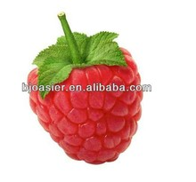 100% pure ISO GMP raspberry leaf extract