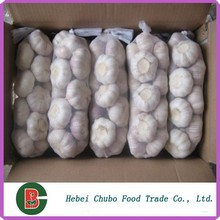 ajo chino en varios tamaño