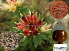 Body Energy Rhodiola Rosea Extract 5% Rosavins