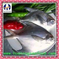 frozen silver pomfret whole round seafood