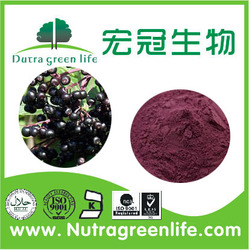 Pure Natural Plant Elderberry Extract 4:1 from China manufacutrer