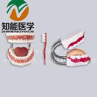 BIX-HY 5 times Medical nursing dental model