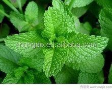 Natural pharmaceutical food grade menthol