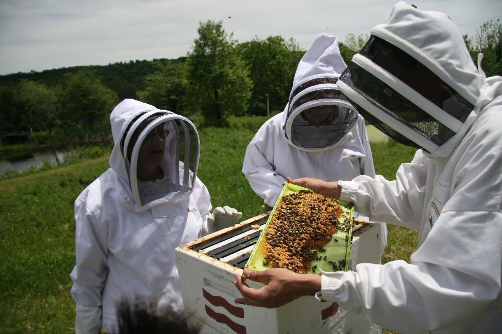beekeeping suit 1