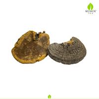 Wild Growing Whole Reishi Mushrooms for Detoxifies
