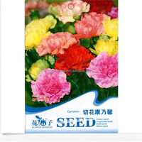 Flower Seed Carnation Herb Seed Home Garden Decoration for 4 Seasons DIY Home Plant Garden Supplies